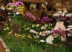 Zuma Canyon Exhibit in Santa Barbara Orchid Show